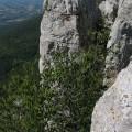 Tupižničke vertikale