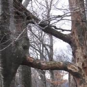Drvo ljubavi na Jablaniku