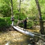 "Prelaz preko reke (obratiti pažnju na ""milje"" preko debla)"