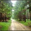 Vinatovaca-Mikulj_2