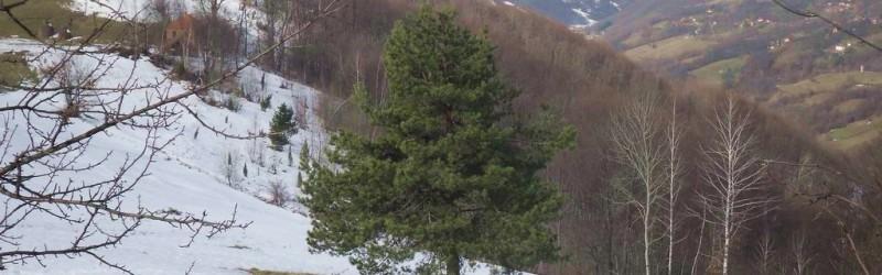 JELOVA GORA Kadinjača – Jelova Gora – Užice (19,5 km)