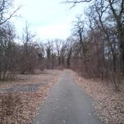 staza kroz šumu