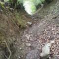 Uspon stazom kroz sumarke